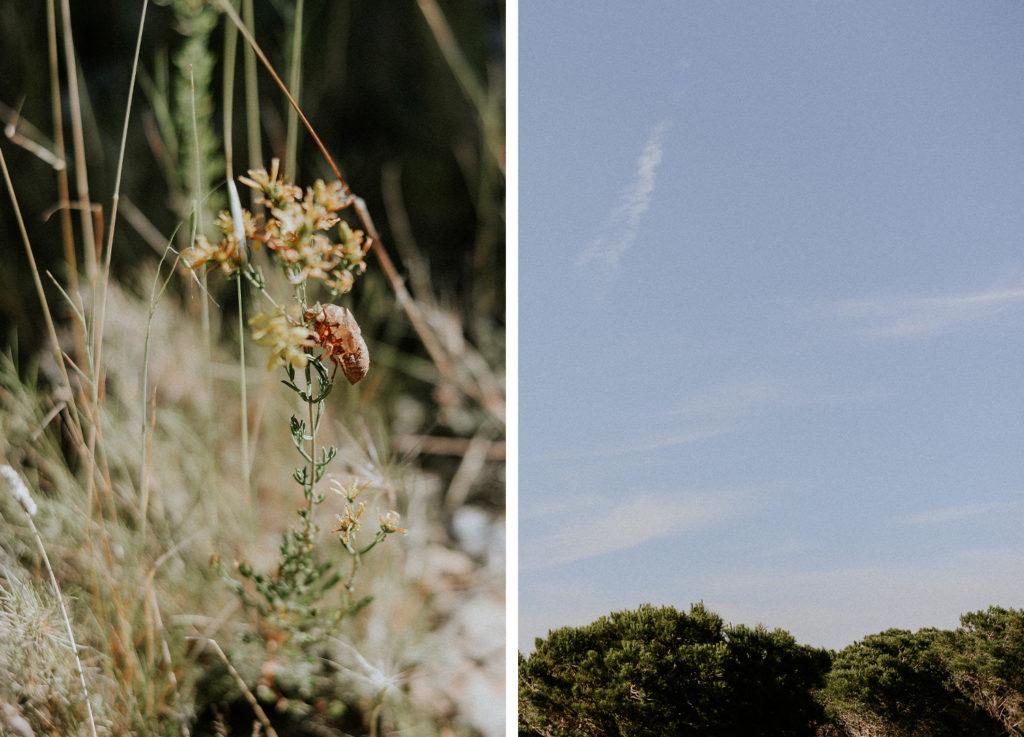 Un fleur et un paysage