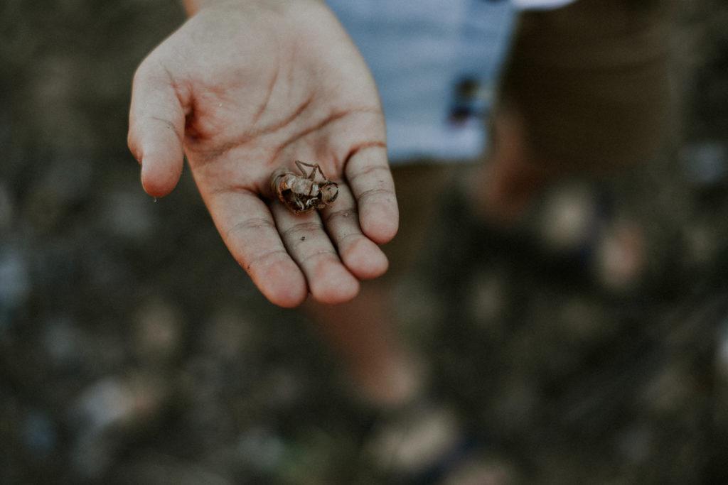 Mue de cigale dans une main
