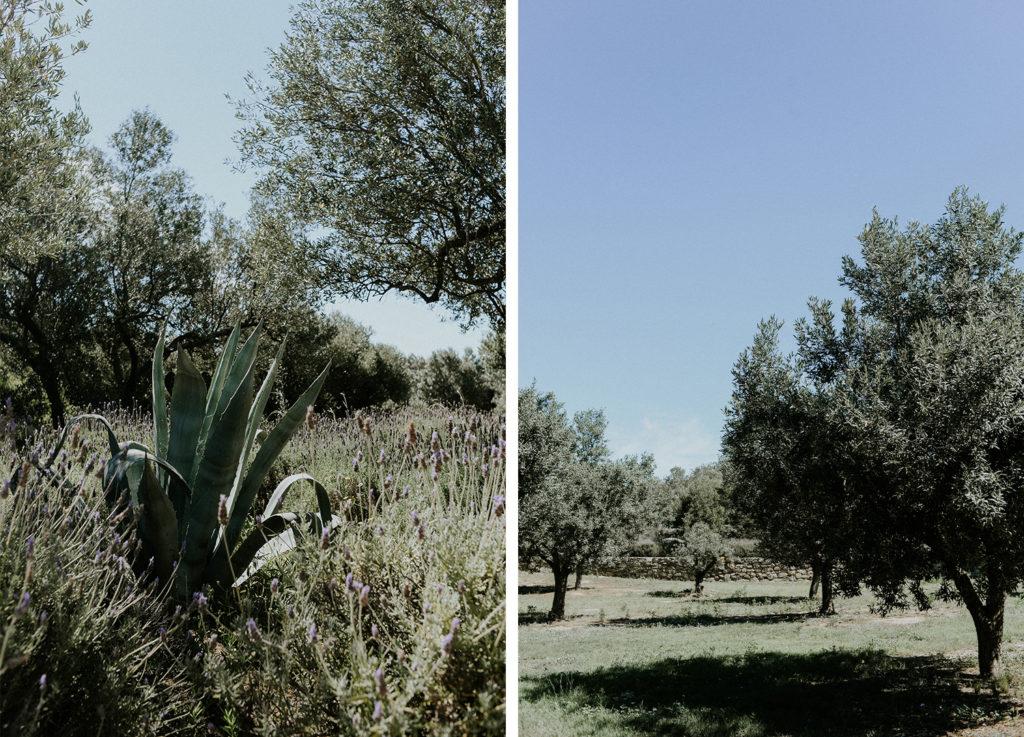 Cactus et champs d'oliviers