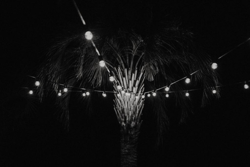 Palmier avec lumière guinguette