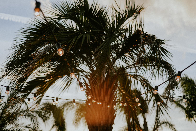Photographe mariage hotel mas lazuli rosas - Palmier avec lumière guinguette