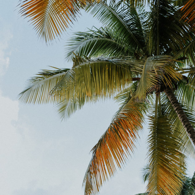 photographe voyage - palmiers en guadeloupe