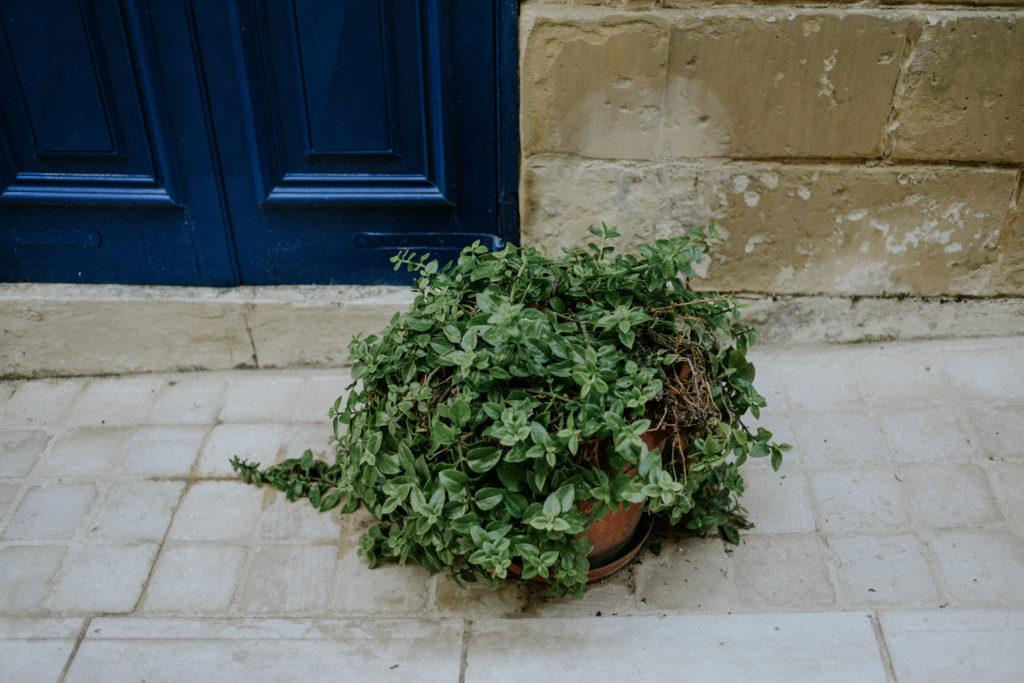 Plante dans la rue