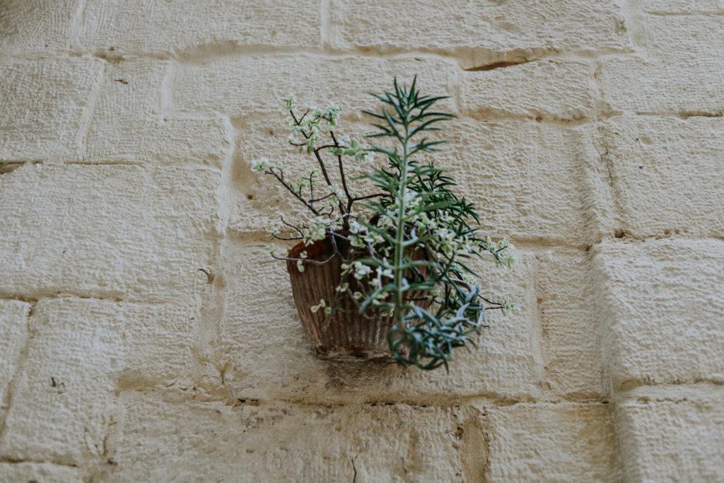 Plante accrochée à un mur